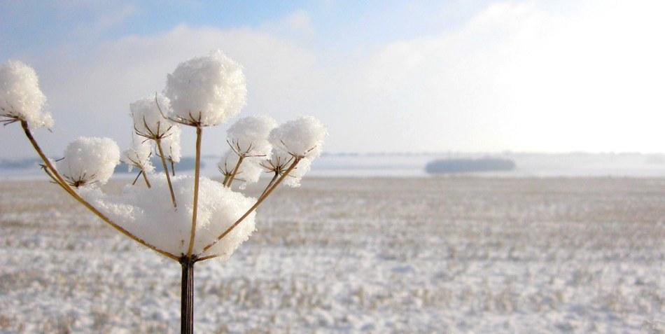 La beauté de la nature en hiver